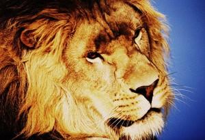 loewe-oil-lion
